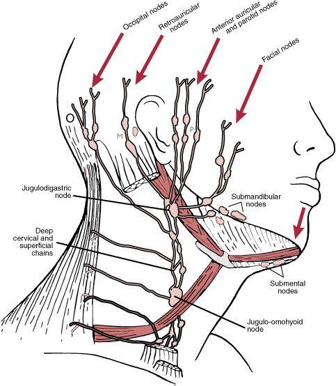 Head    and Neck Lymphatics